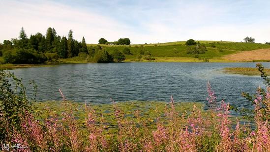 Photo fiche road-trip N° 15_383_1 - Les portes du Périgord blanc - L'étang des Oussines - Saint-Merd-les-Oussines -  19170