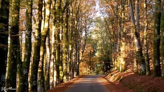 Photo fiche road-trip N° 16_227_1 - Entre Vézère sauvage et Corrèze inattendue - La route des Hêtres - Lacelle - 19170