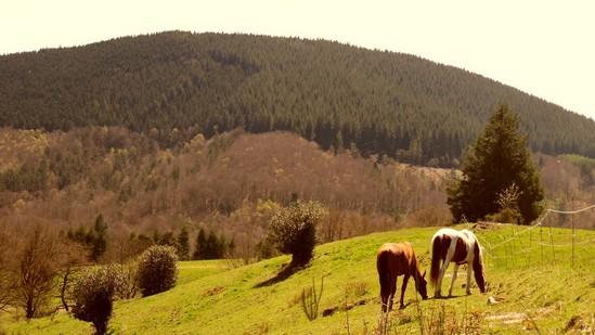 Photo fiche road-trip N° 18_420_1 - Le massif des Monédières - Panorama sur la ferme équestre de Trephy - Chaumeil - 19390
