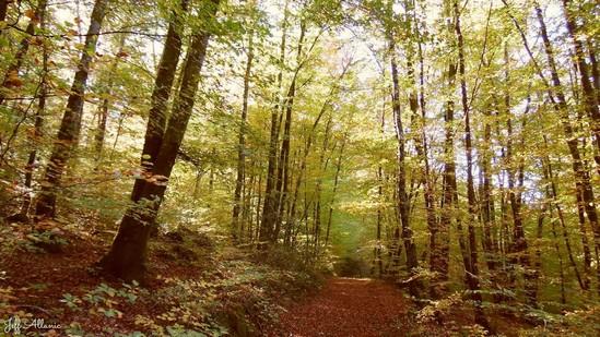 Photo fiche road-trip N° 3_187_1 - Corrèze en plein coeur - Forêt de Blanchefort - Lagraulière - 19700