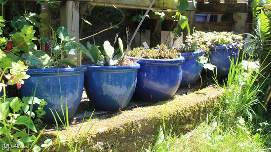 Photo fiche road-trip N° 8_8046_1 - Sources et inspirations de Coco Chanel - Le jardin botanique de Lostanges - Lostanges - 19500